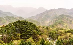 Обои дымка, зелень, горы, природа, деревья, North Korea, лес