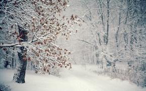 Картинка зима, снег, дерево, метель