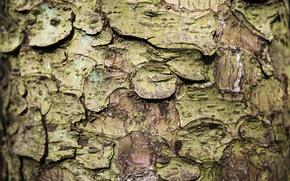 Картинка природа, дерево, кора