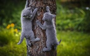 Картинка серый, котята, дерево
