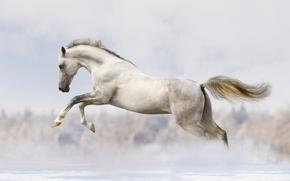 Картинка snow, white horse, running