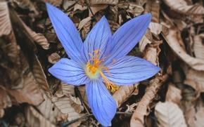 Картинка листья, макро, Цветок
