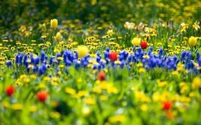 Обои цветы, природа, сад, поле flowers