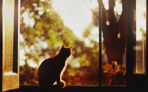 Картинка кот, дерево, окна