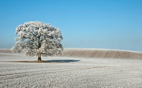 Картинка иней, поле, дерево, Небо, зима.