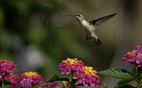 Картинка зелень, цветы, птица, колибри, солнечно