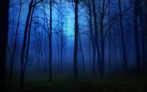 Картинка свет, forest, деревья, lights, луна, moon, trees, страх, ночь, night, лес, пейзаж, темнота
