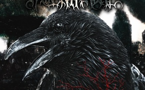 Картинка смерть, разрушение, ворон, ДОКТРИНА НЕНАВИСТИ, Raven Throne, вороний трон