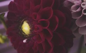 Картинка цветок, макро, цветы, красный, природа, flower, flowers, цветочный, бордовый, цветочек, красный цветок, красивый цветок, red …