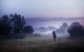 Картинка поле, туман, кони, утро