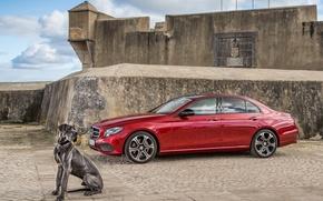 Картинка Mercedes-Benz, собака, E-Class, мерседес, W213