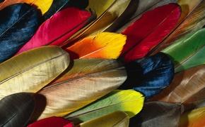 Картинка перья, разноцветные обои, перо попугаи