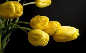 Картинка flower, yellow, nice