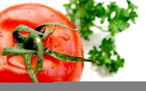 Обои помидор, зелень, томат, овощи