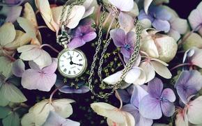 Картинка цветы, часы, полевые, сиреневые, карманные