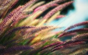 Картинка трава, макро, растение, колоски