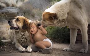 Картинка собаки, мальчик, друзья