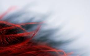 Картинка макро, фон, цвет, форма