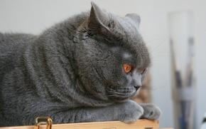 Картинка Котик, котейка, тотафеичь
