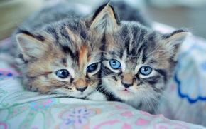 Обои котята, kitty, cat