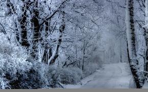 Картинка зима, дорога, деревья, туман