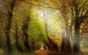 Картинка Poland, Lower Silesia, mystical forest, Msciwojow