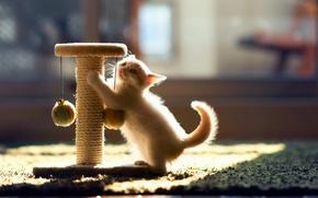 Обои кошка, котенок, игра, Hannah, © Ben Torode
