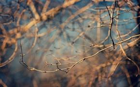Картинка лес, деревья, ветки, природа, фото, весна, wallpapers