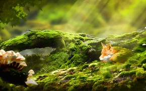 Картинка лес, трава, грибы, мох, паутина, арт, лиса, лис, бревно, солнечные лучи