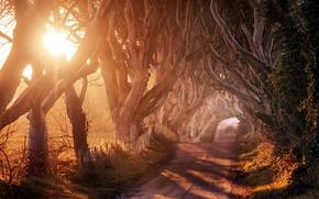 Картинка дорога, деревья, пейзаж, природа, утро