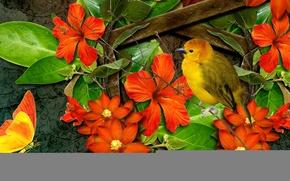 Картинка цветы, коллаж, птица, бабочка