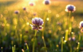 Картинка зелень, поле, цветок, лето, трава, листья, солнце, цветы, фон, green, обои, красота, размытие, утро, луг, ...