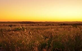 Обои желтый небо, поле, солнечный, холмы, горизонт, долина, закат