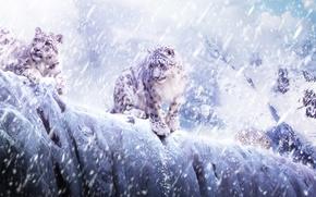 Обои леопард, животные, горы, снег, снегопад, лед, ирбис, кошки, барс, cats