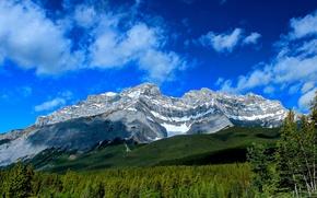 Картинка лес, горы, Канада, Альберта, Banff National Park, Alberta, Canada, Банф, Cascade Mountain