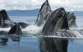 Обои animals, whales, sea