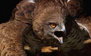 Обои природа, фон, птица, silveryhawk