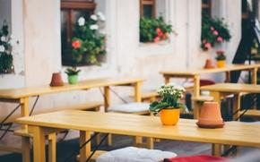 Обои coffee, coffee shop, cafe, jars, flowers