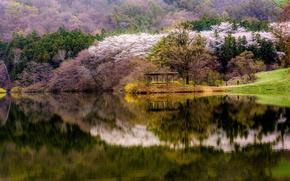 Обои весна, лес, вода, беседка, озеро, цветение, берег, деревья, отражение, горы, Южная Корея