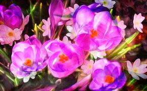 Обои цветы, лепестки, краски, линии, сад