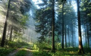 Обои дорога, свет, лес, природа
