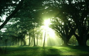 Картинка солнце, свет, деревья, природа