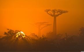 Обои африка, саванна, природа, деревья