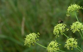 Картинка макро, растения, насекомое