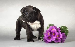 Картинка собака, щенок, цветы