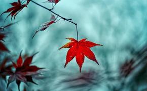 Картинка макро, красный, фон, дерево, widescreen, обои, размытие, ветка, листик, wallpaper, листочек, широкоформатные, background, leaves, macro, …