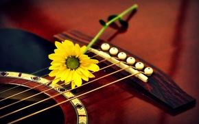 Картинка цветок, макро, гитара
