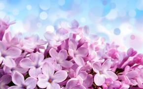 Картинка цветы, блики, фон, голубой, красивые, лиловые, Pale red-violet flowers
