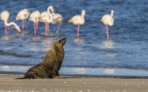 Картинка вода, птицы, природа, берег, котик, фламинго