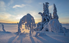 Картинка зима, поле, небо, снег, деревья, закат